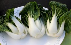 Baby Bok Choy, Brassica rapa subsp chinensis. Popular Asian vegetable with white colored stalks with swollen base and dark green leaves with crinklu texture Royalty Free Stock Images