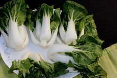 Baby Bok Choy, Brassica rapa subsp chinensis. Popular Asian vegetable with white colored stalks with swollen base and dark green leaves with crinklu texture Royalty Free Stock Photos