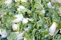 Baby Bok Choy Royalty Free Stock Photo