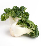 Baby bok choy isolated Stock Photos
