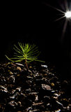 Baby Bonsai Tree black background and star light Royalty Free Stock Images