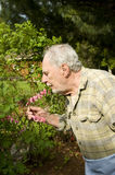 Baby boomer gardener Stock Photos