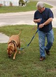 baby boomer walking dog Stock Photos