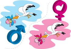 Baby born. The stork brings? Baby is born, a boy or a girl? vector Stock Photos