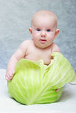 Baby born from cabbage Stock Photography
