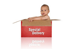 Baby in box. Little baby in box  on white background Royalty Free Stock Photo