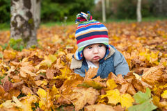 Baby boy in autumn leaves Stock Photos