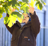 Baby boy and autumn tree Stock Photo