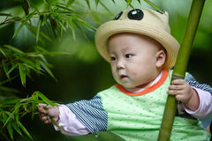 Baby boy in bamboo forest Royalty Free Stock Photography