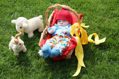 Baby boy in a basket and two sheeps on grass Royalty Free Stock Photos