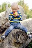Baby boy biting an apple. Sitting on a log royalty free stock photography