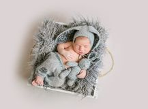 Baby boy in bunny costume sleeping. Funny newborn boy in grey bunny bonnet and grey knitted pants sleeping and holding bunny toy in his hand on wooden box with Stock Photography