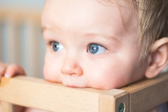Baby boy chewing the crib`s wooden edge stock photography
