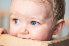 Baby boy chewing the crib`s wooden edge stock photos