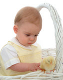 Baby Boy with Chicken. Baby boy sitting in a basket with a yellow chick Royalty Free Stock Images