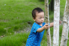 Baby boy  climbing tree Royalty Free Stock Image