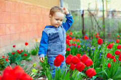Baby boy in colorful spring garden Stock Photography