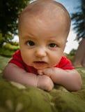 Baby boy crawling Royalty Free Stock Photos
