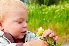 Baby boy and daisy Stock Photos
