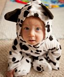 Baby boy In Dalmatian costume Stock Photo