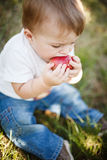 Baby boy eating an apple Royalty Free Stock Photos