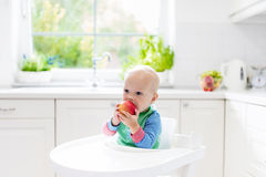 Baby boy eating apple in white kitchen at home Royalty Free Stock Image