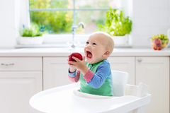 Baby boy eating apple in white kitchen at home. Baby eating fruit. Little boy biting apple sitting in white high chair in sunny kitchen with window and sink Royalty Free Stock Image