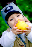 Baby boy eating big apple. Baby boy holding and eating big yellow apple stock photo