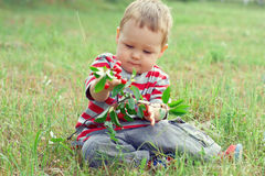 Baby boy eating fresh ripe cherry. Cute baby boy eating fresh ripe cherry while sitting on the grass Stock Photography
