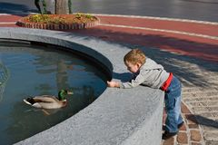 Baby boy feeding duck Royalty Free Stock Photo