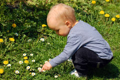 Baby boy on flower field Royalty Free Stock Photography
