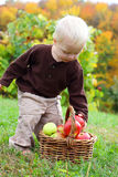 Baby Boy Grabbing Apple from Basket in Autumn Royalty Free Stock Photography
