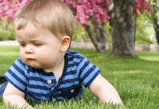Baby Boy On the Grass Royalty Free Stock Image