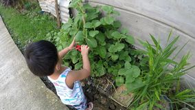 Baby boy learning gardening cutting plant with toy pliers. San Pablo City, Laguna, Philippines - October 24, 2017: baby boy learning gardening cutting plant with stock video