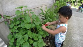 Baby boy learning gardening cutting plant with toy pliers. San Pablo City, Laguna, Philippines - October 24, 2017: Baby boy learning gardening cutting plant with stock footage