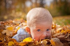 Baby boy playing in leaves Stock Image
