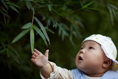 Baby boy looking bamboo leaves Stock Photography