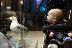 Baby boy looking at bird Stock Photo