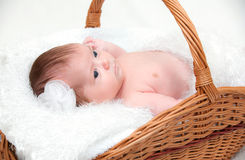 Baby boy lying in basket Stock Photos