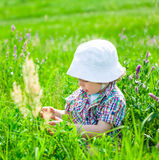 Baby boy on a meadow Stock Images