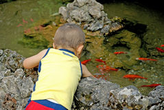 Baby boy petting fish Royalty Free Stock Image