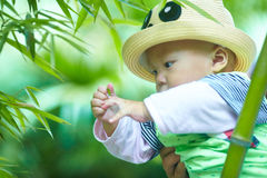 Baby boy play in bamboo forest Royalty Free Stock Images