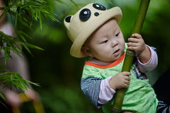 Baby boy play in bamboo forest Stock Photos