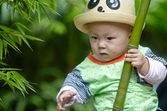 Baby boy play in bamboo forest Stock Image