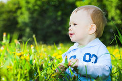 Baby boy play with dandelions Stock Images