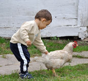 Baby boy playing with chicken stock photos