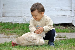 Free Baby  Boy Playing With Chicken Stock Images - 35620954