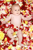 Baby boy in a rose plants. Beautiful baby boy in a rose plants royalty free stock photo