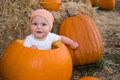 Baby boy sat in pumpkin. Close up of cute baby boy sat in hollowed out Halloween pumpkin Stock Photography