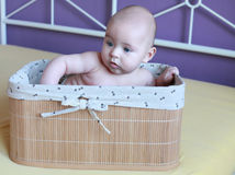 Baby boy sitting in basket, purple background Stock Photography